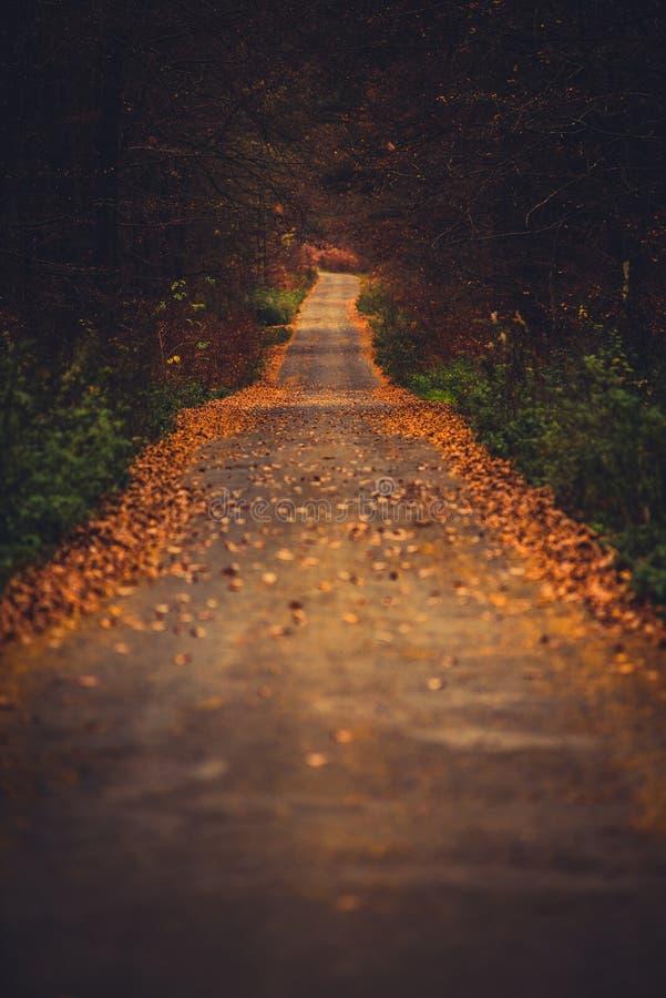 叶子盖了路入森林 库存照片