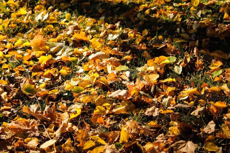 叶子秋天在高度秋天 图库摄影