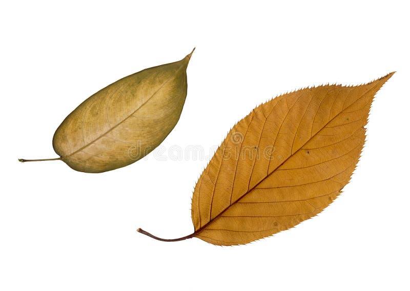 叶子结构 图库摄影