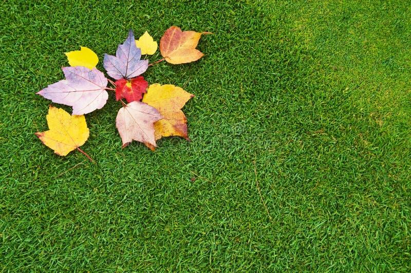 叶子绿色 库存照片