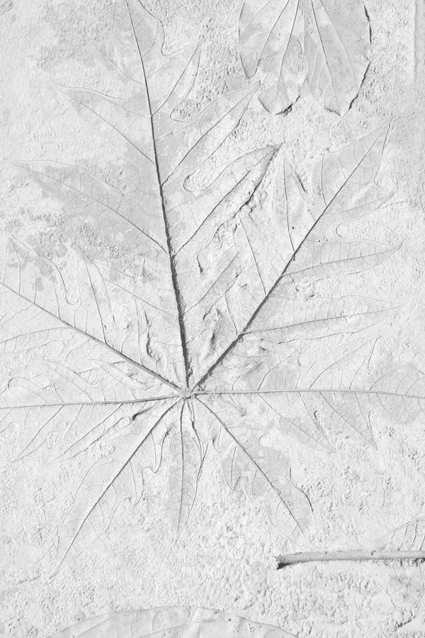 叶子老标记在灰色具体背景的 免版税库存图片