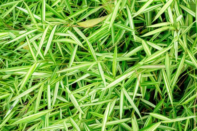 Download 叶子自然backgroun 库存图片. 图片 包括有 夏天, 装饰, 季节, 有机, 花卉, 增长, 农庄 - 59108279