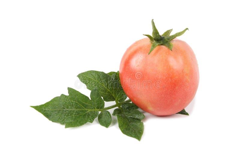 叶子蕃茄 免版税库存图片