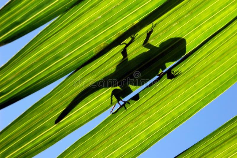 叶子蜥蜴 库存图片