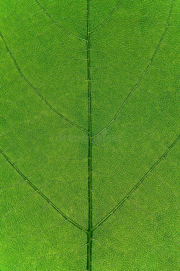 叶子表面 免版税图库摄影