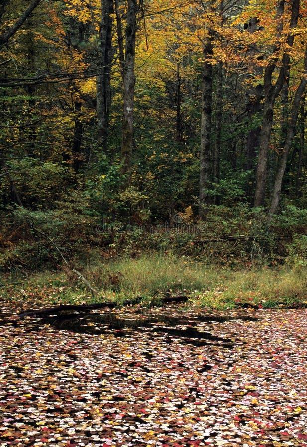 叶子被遮盖的桥 库存图片
