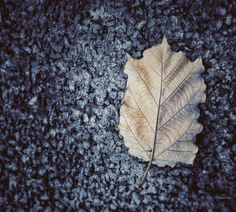 叶子路秋季自然 免版税库存照片