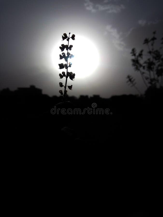 叶子轻的太阳黑暗心情天气天空花insky下午 免版税库存照片