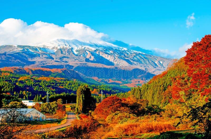 叶子颜色变动、用雪和白色云彩和高山盖的秋叶 在秋田,日本 免版税库存照片