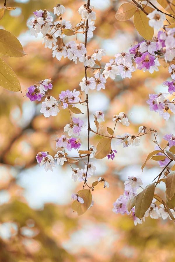 叶子颜色变动和开花的花 免版税图库摄影