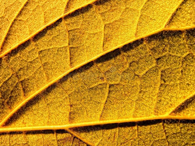 叶子黄色 图库摄影