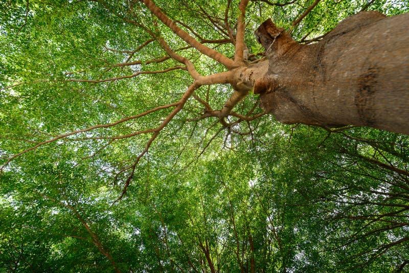 叶子,枝杈,绿色,黄色,美丽,适用于背景 免版税图库摄影