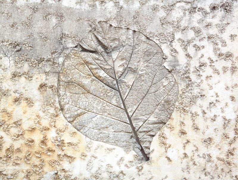 叶子水泥 库存图片
