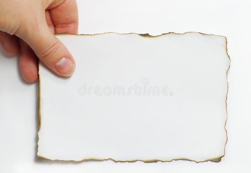 叶子 免版税库存图片