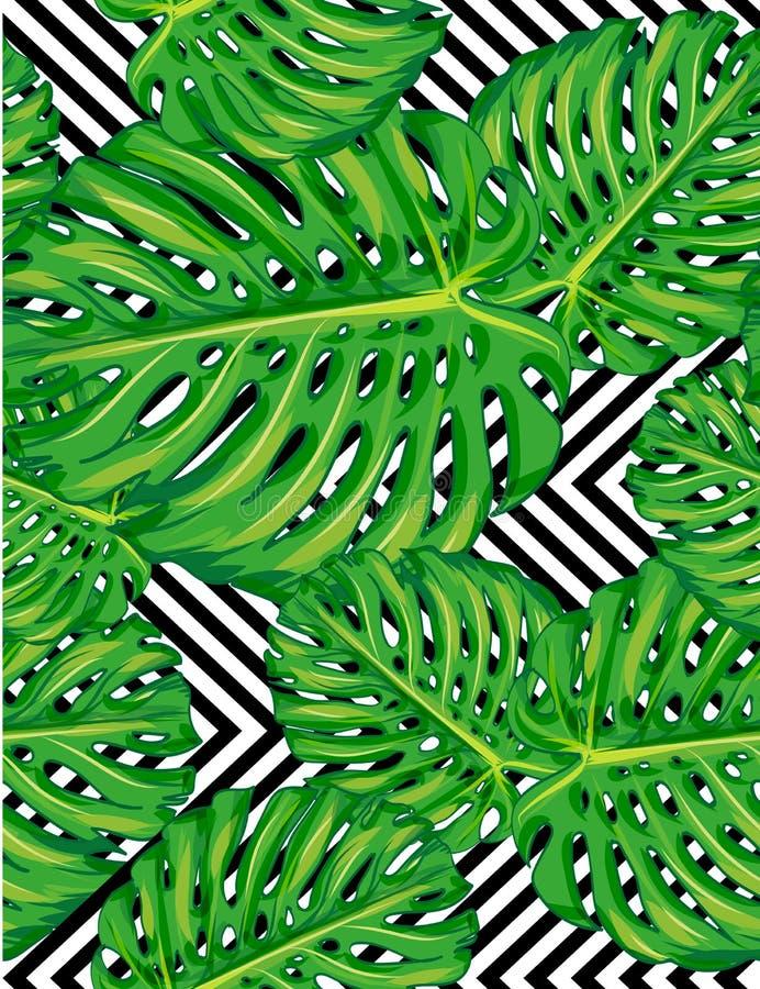 叶子monstera的无缝的样式 向量例证