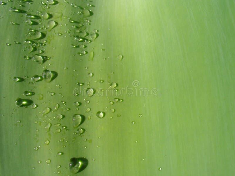 叶子waterdrop 免版税库存照片