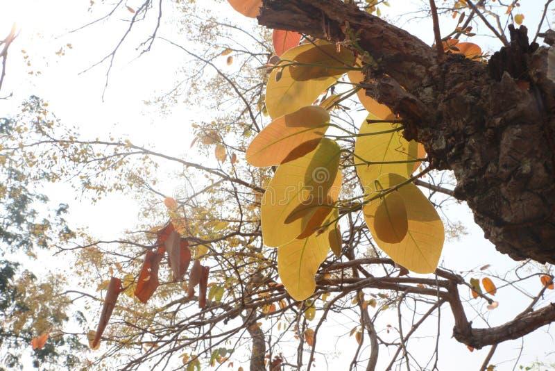 叶花林中的山梨 库存照片