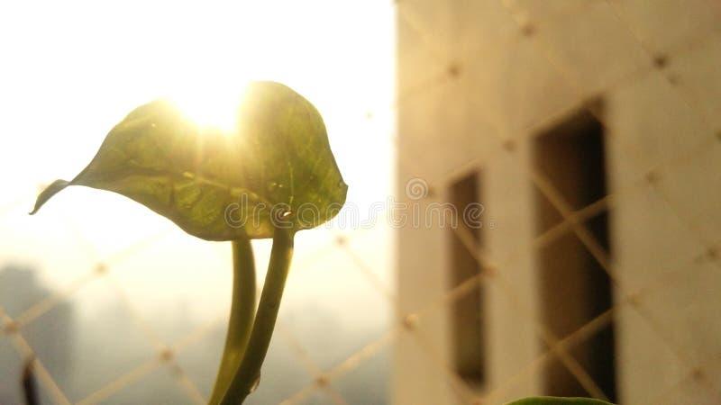 叶茂盛早晨 库存照片