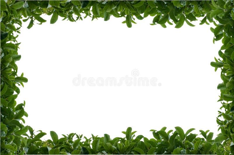 叶茂盛框架绿色的套期交易 免版税库存图片