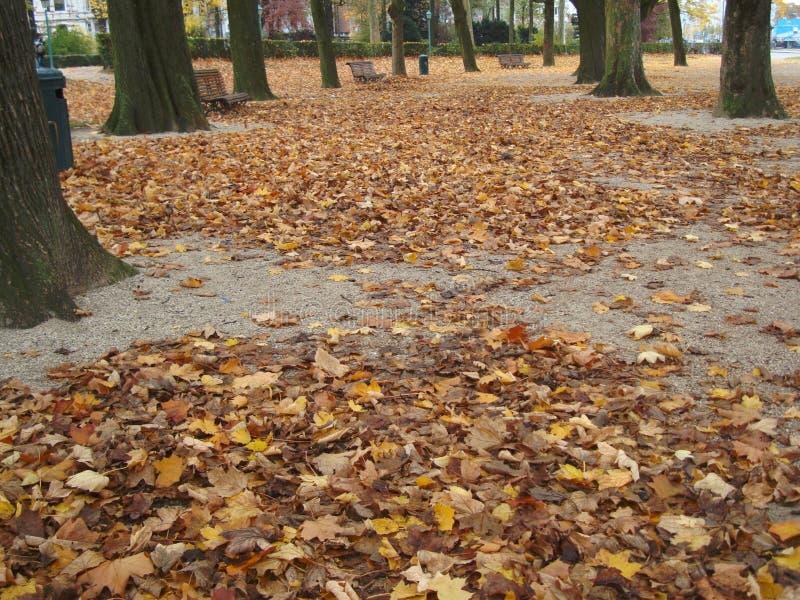叶茂盛道路在秋天 库存照片