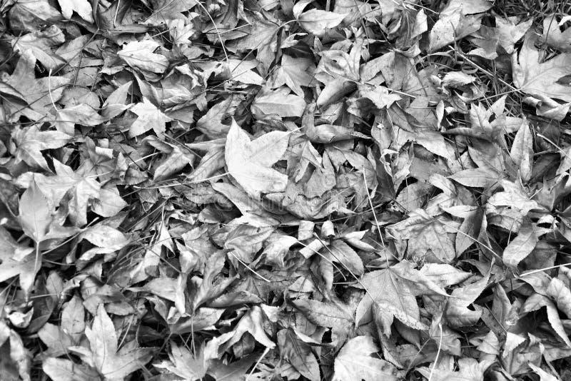 叶蝉壁纸 免版税库存图片