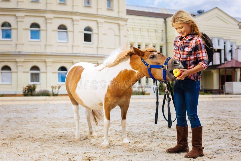 吃一点苹果的逗人喜爱的棕色和白色小马站立近的女孩 免版税库存照片