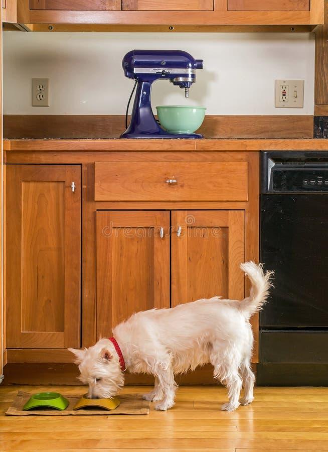 吃他的正餐的小的狗在厨房里 库存照片