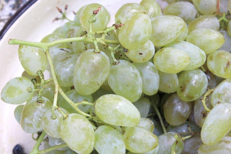 吃和点心的白色甜葡萄 免版税库存图片