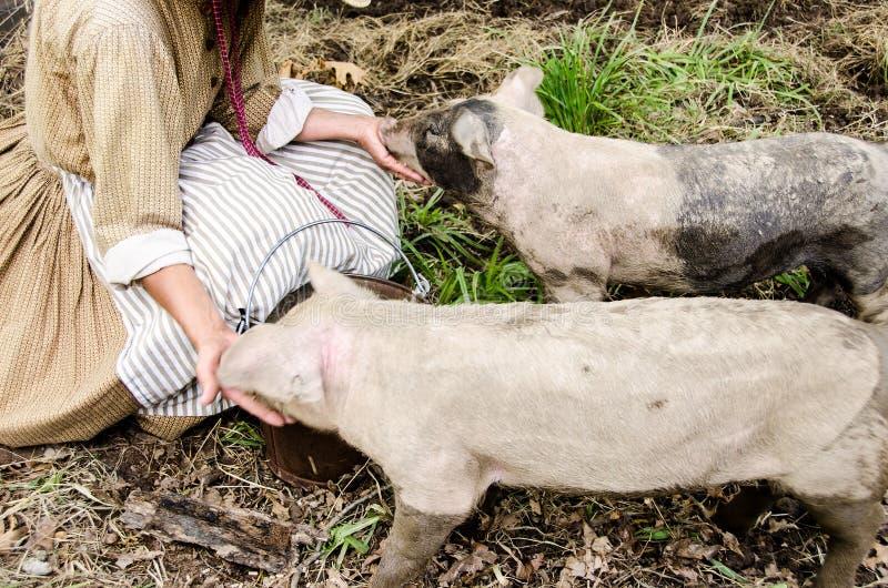 吃哺养的两头小的猪 免版税图库摄影