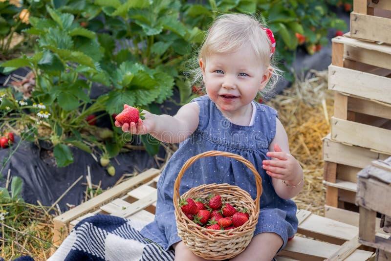 吃在草莓领域的女孩草莓 免版税库存照片