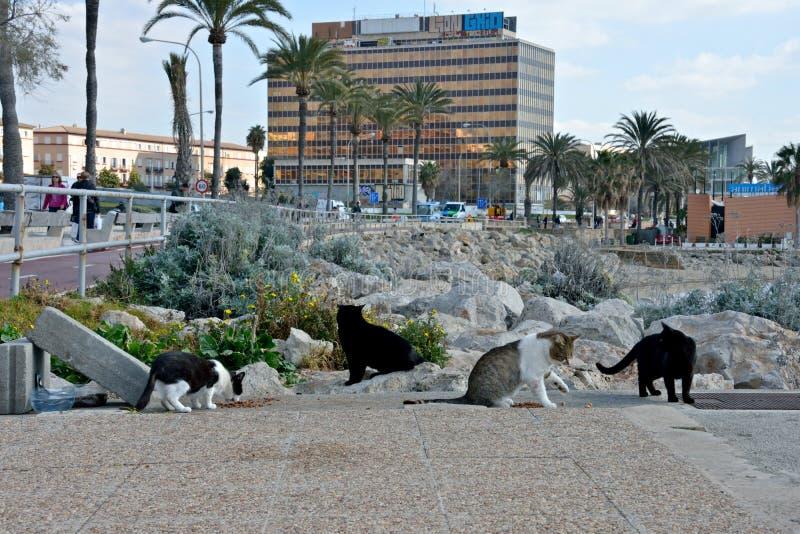 吃在街道的四野猫 库存图片