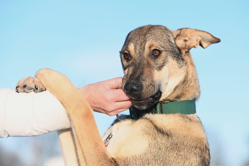 吃无法控制在天空蔚蓝背景狗的画象  免版税库存图片