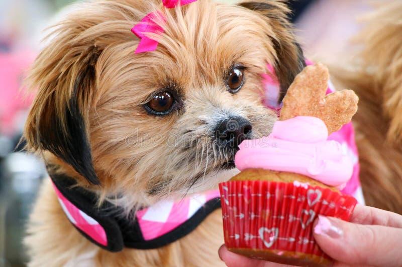 吃生日杯形蛋糕的逗人喜爱的狗 库存照片
