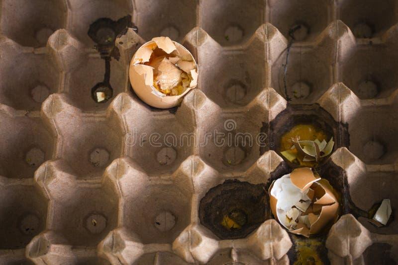 吃的坏腐烂的鸡蛋 图库摄影