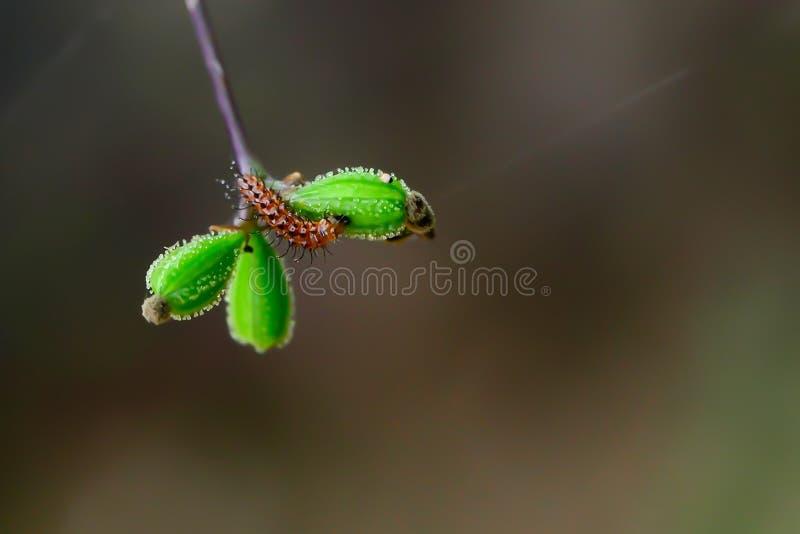吃种子的草蠕虫 库存图片