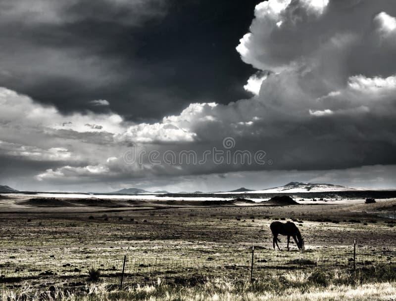 吃草与thunderheads的马 向量例证
