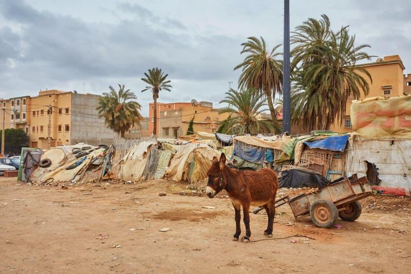 吃草和搜寻食物的布朗驴在垃圾填埋荒地垃圾堆积场 库存照片