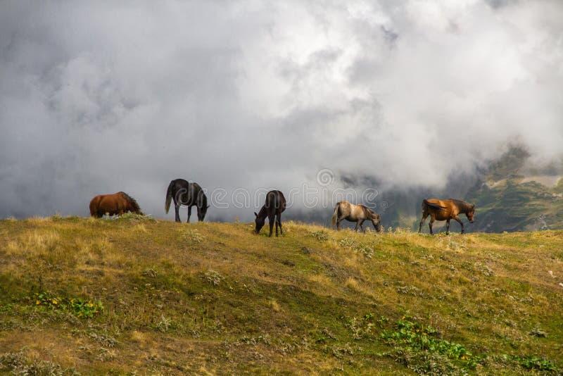 吃草在小山的马 免版税库存图片
