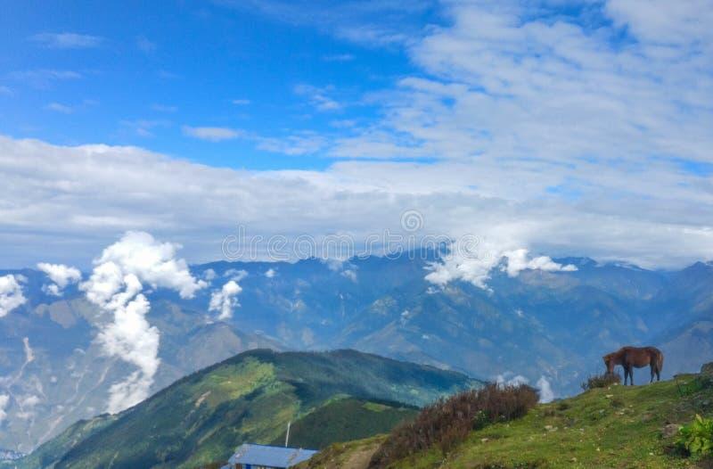 吃草在小山顶部的马 图库摄影