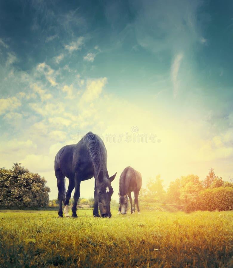 吃草在树和天空背景的秋天草甸的马,被定调子 免版税库存图片