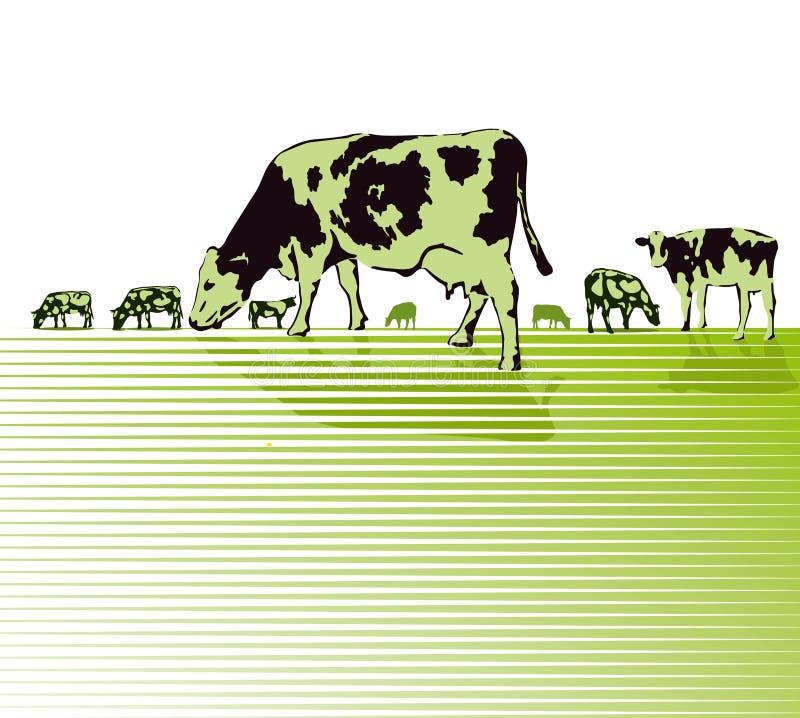 吃草在牧场地的母牛草图  向量例证