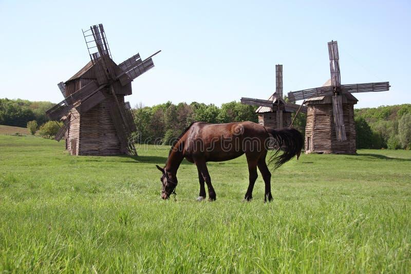 吃草在草甸的海湾马在风车附近 免版税库存图片