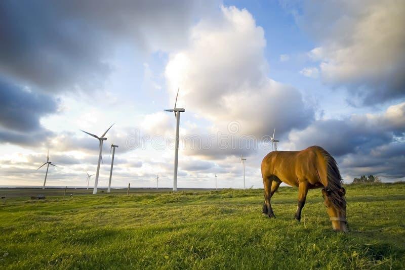 吃草在风车附近的马 免版税库存照片