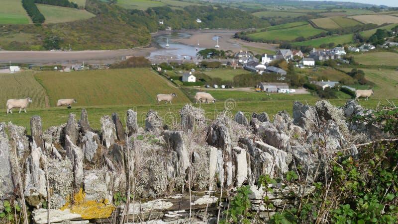 吃草在Bantham村庄附近的绵羊在德文郡英国 免版税库存照片