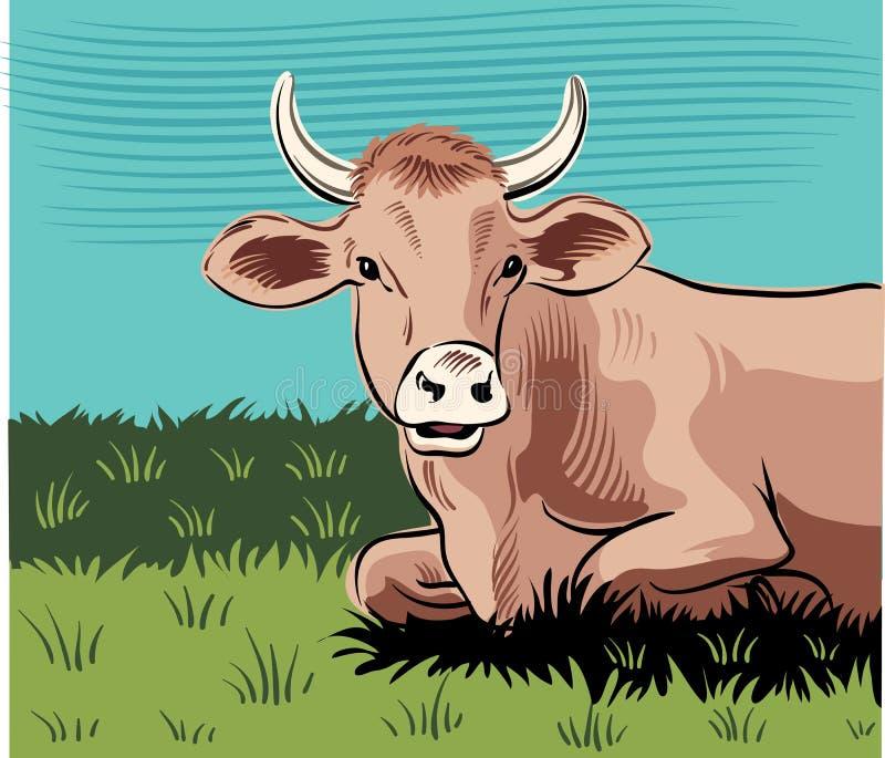 吃草母牛,在草甸 库存例证