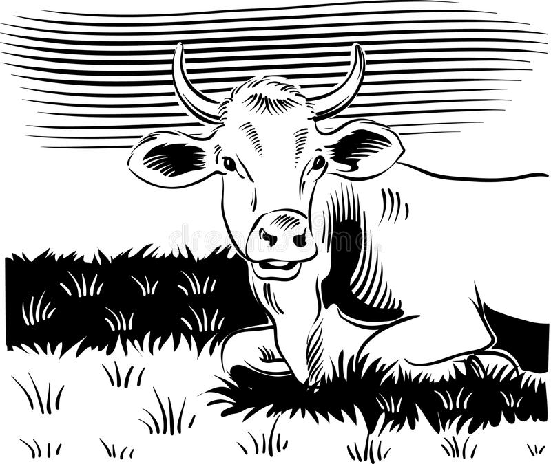 吃草母牛,在草甸 皇族释放例证