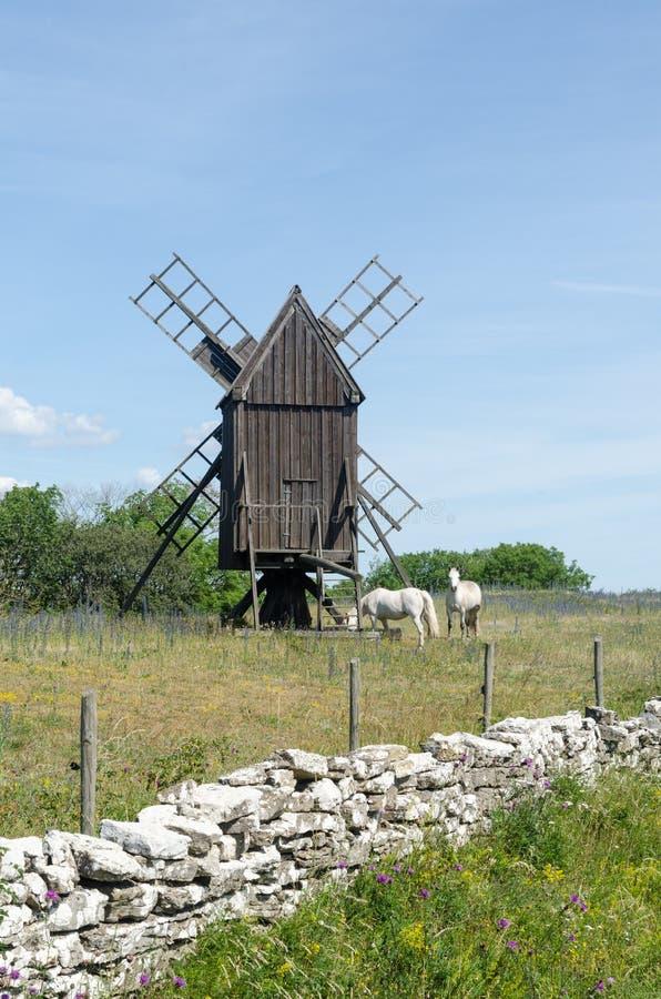吃草由一台老风车的马在海岛奥兰在瑞典 免版税库存照片