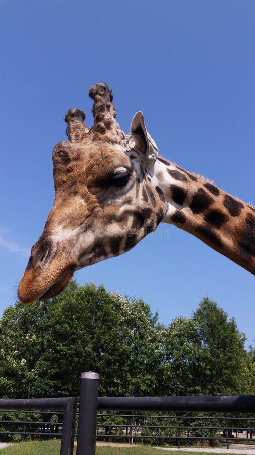 吃草的动物动物颜色撕毁动物园 免版税库存图片