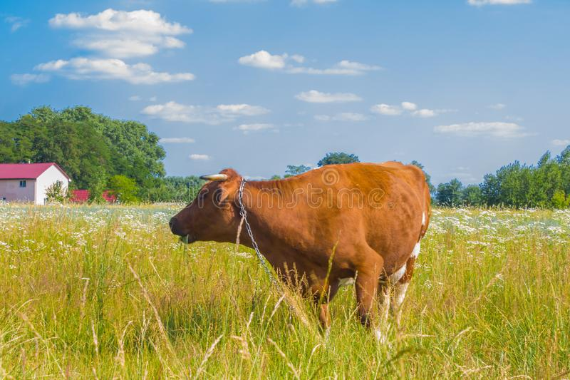 梦见牛吃别人庄稼