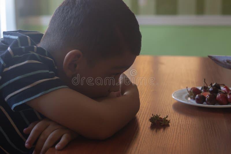 吃草莓的一个小男孩 E 免版税库存图片